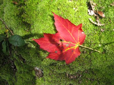What We've Learned About Catskill Forests Since 2014 With Dr. Mike Kudish