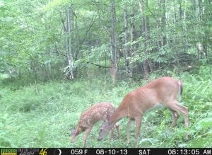 Trail Camera Program