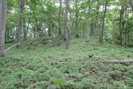 Forestry for Wildlife Workshop