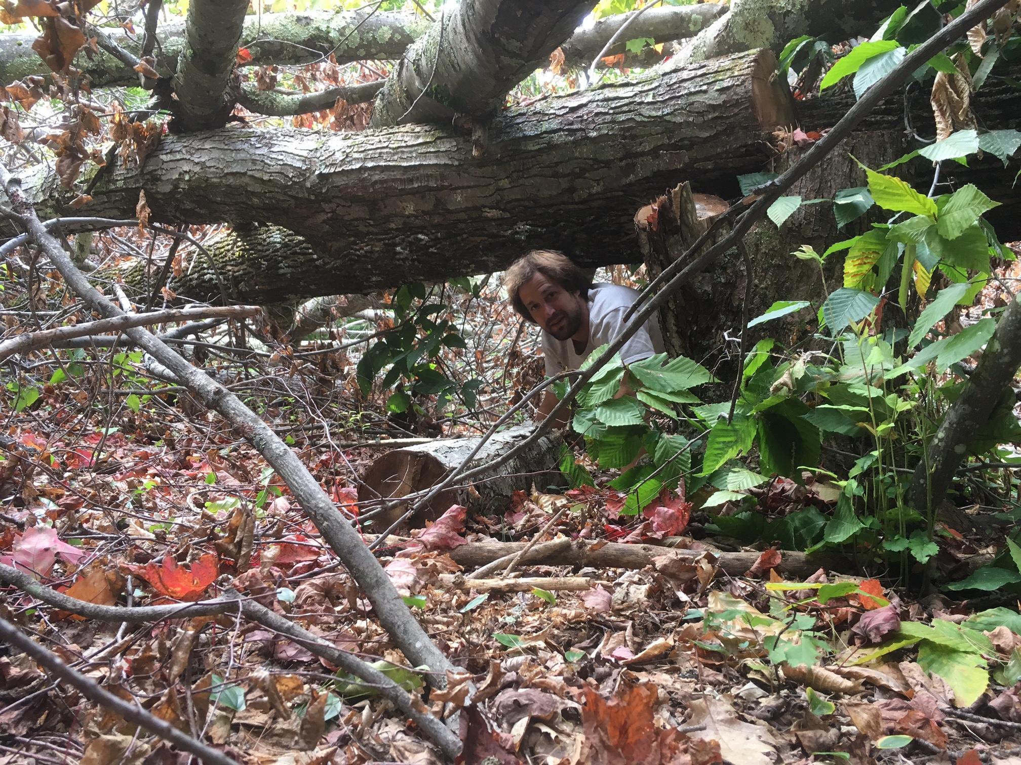 Cover, Wildlife habitat management, hinge cutting