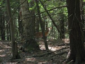 deer_ruttenberg_1