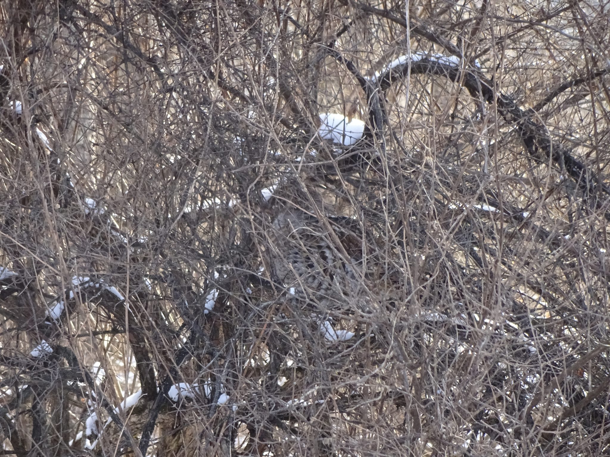 Can You Spot the Grouse?