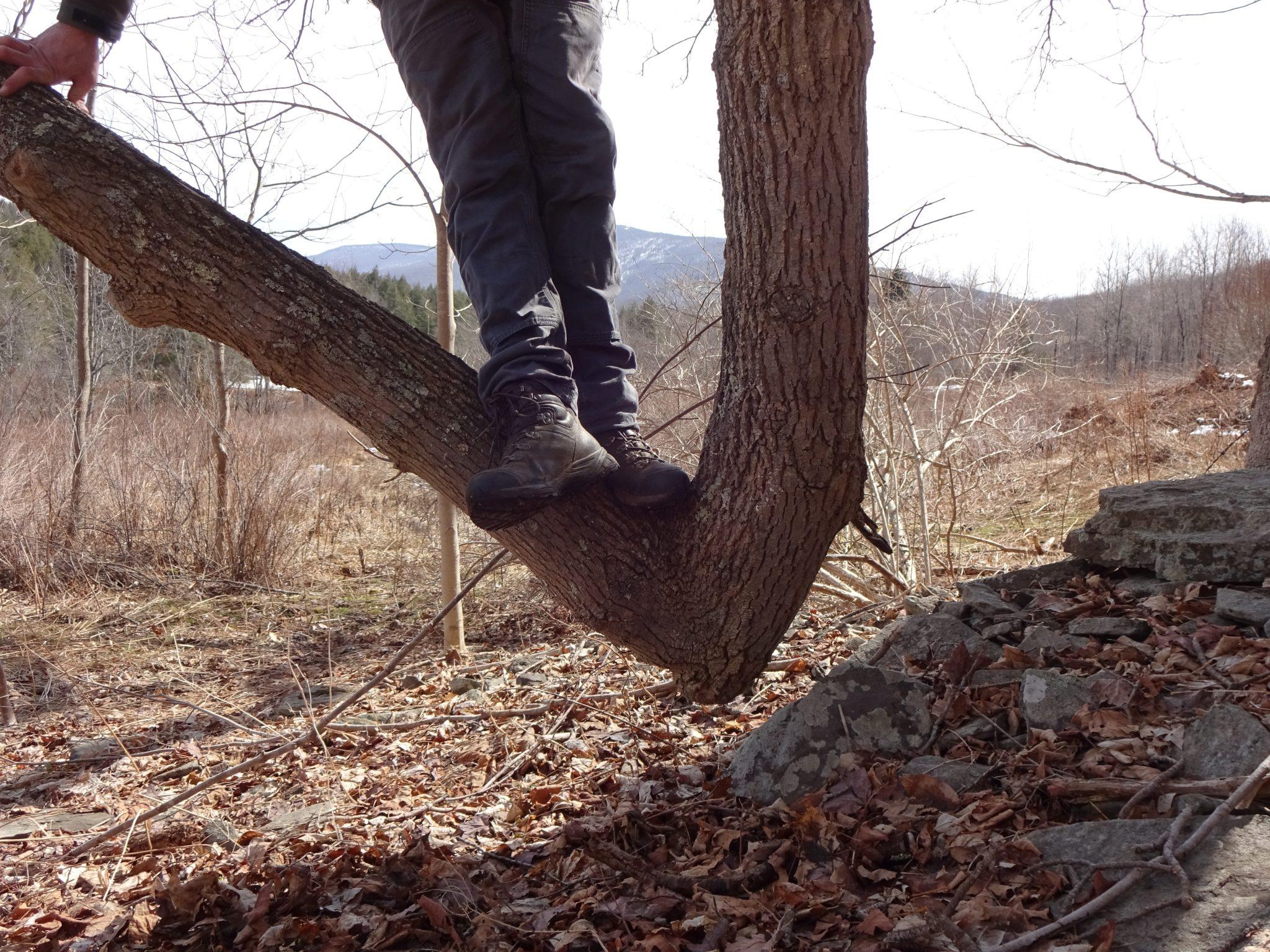 Tree Peculiarities
