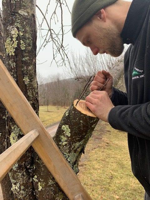 2019 Apple Tree Grafting Season Begins
